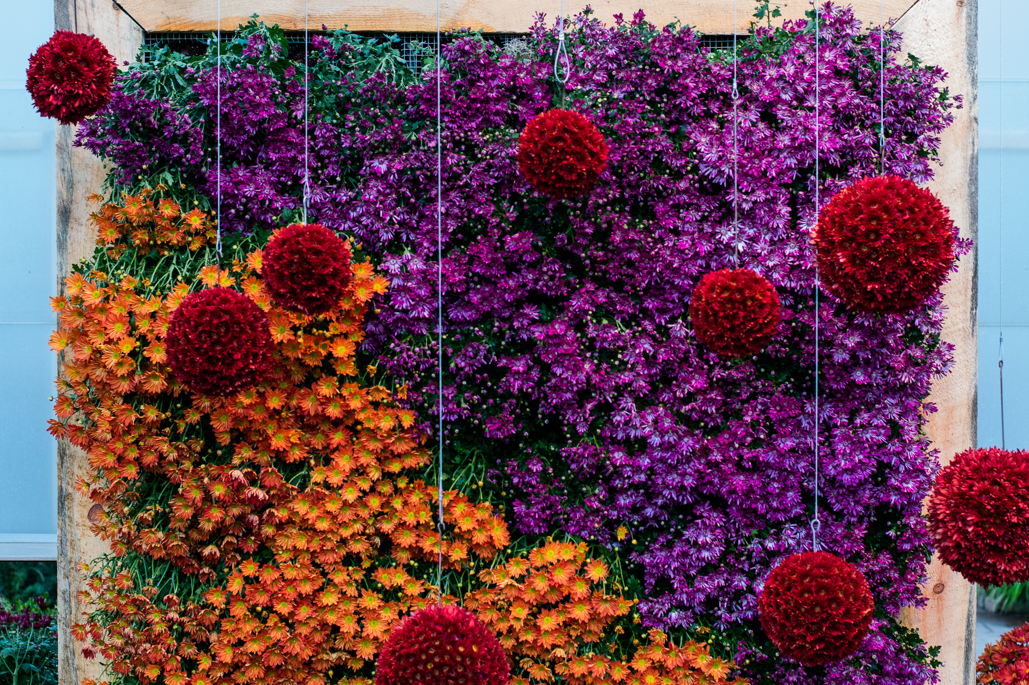 Frederik Meijer Gardens exhibit turns mums into works of art