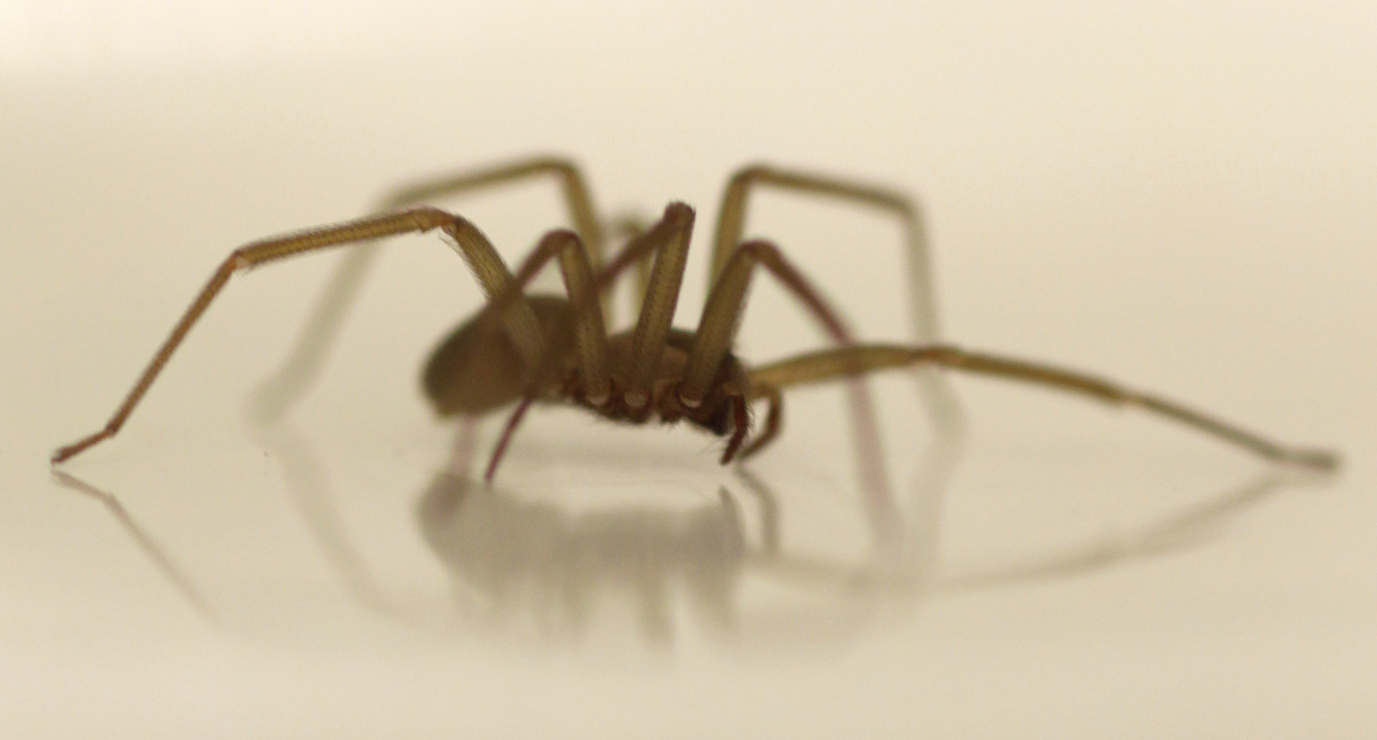 She thought she had water in her ear. It was actually a venomous brown recluse spider.