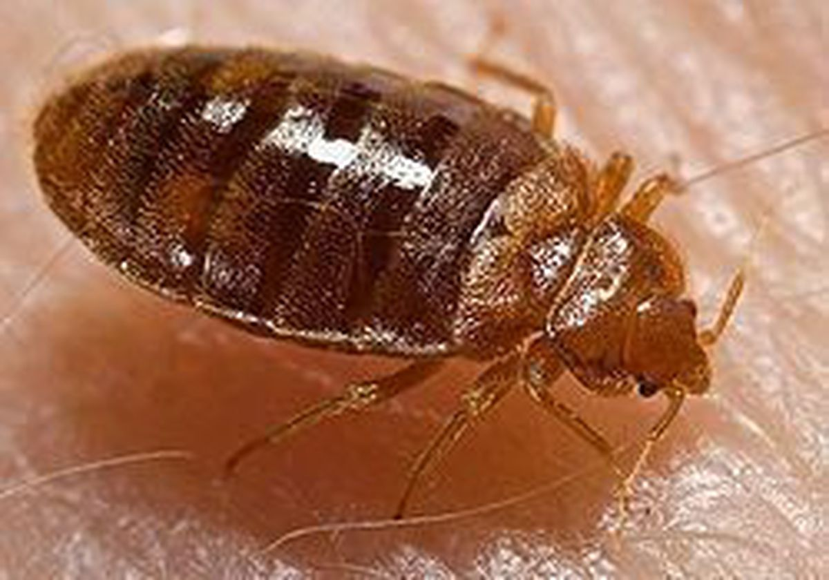 Bed bugs shut down Pa. school district and parents are biting mad