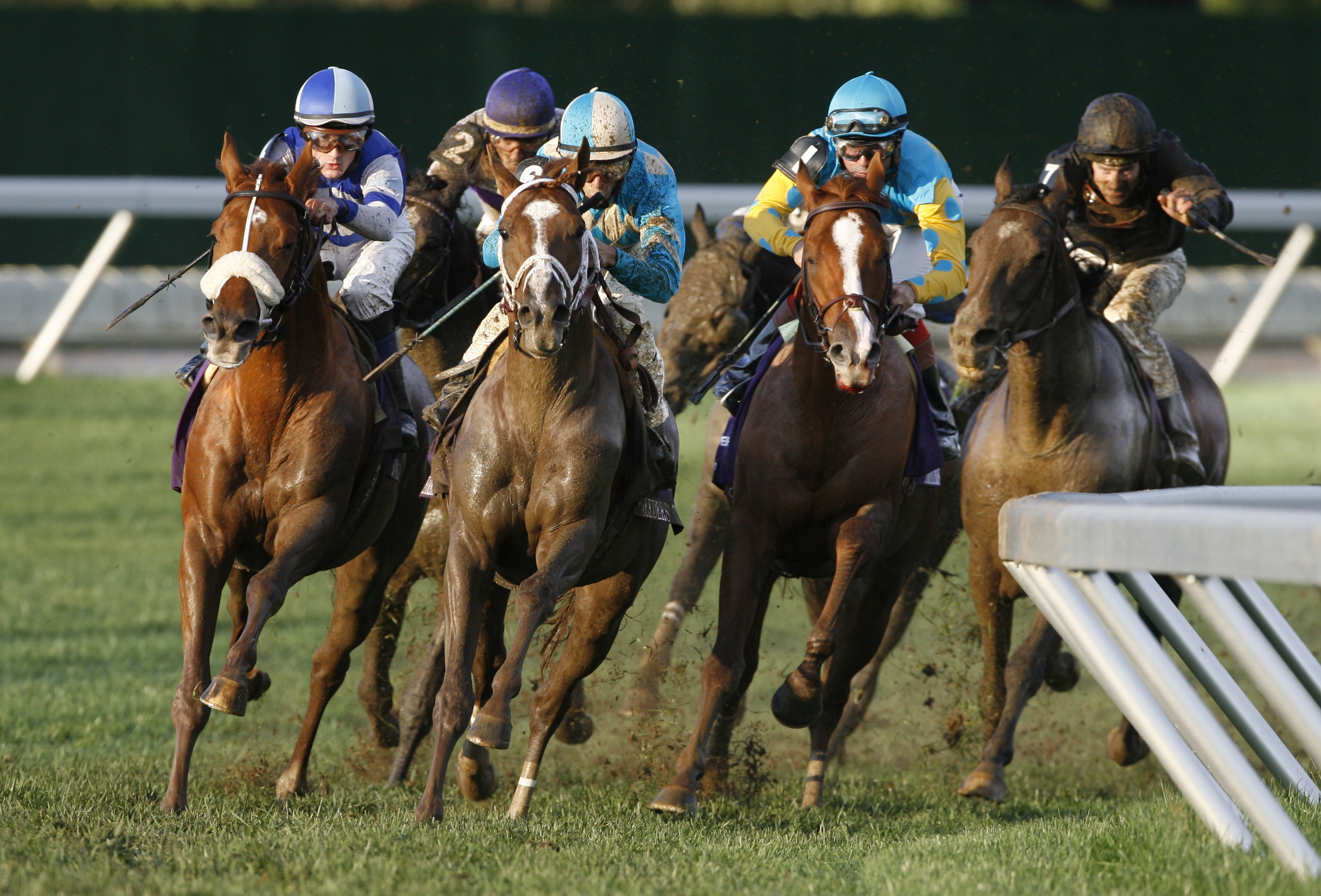 We know more about racehorses than Congress does, group of veterinarians say
