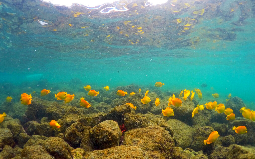 Lingering Pacific heat wave threatens Hawaii coral - OregonLive