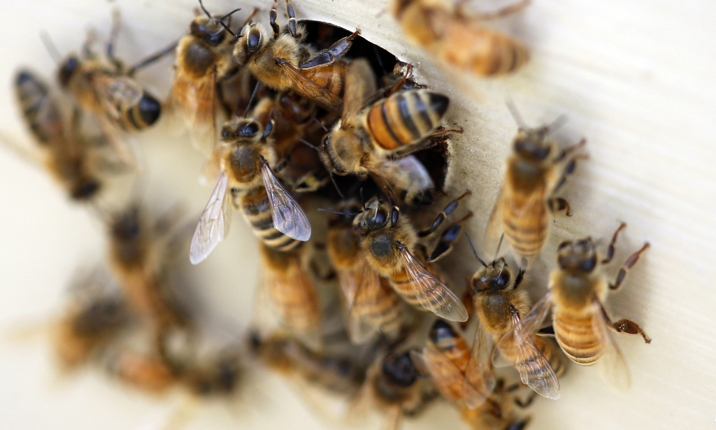Save the bees: Urge Cuomo to ban harmful pesticide (Your letters)