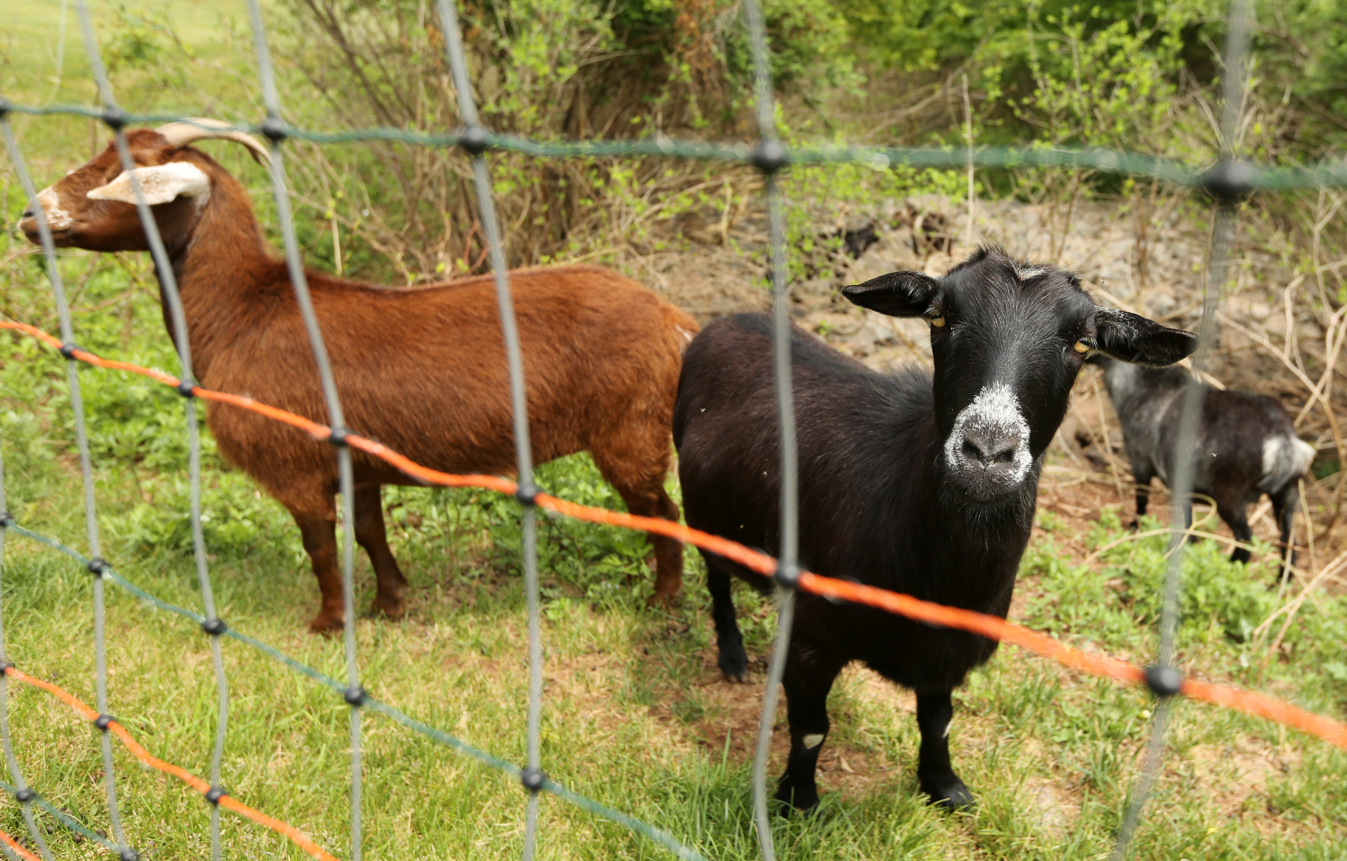 How to cut your property taxes in N.J.? Start a farm.