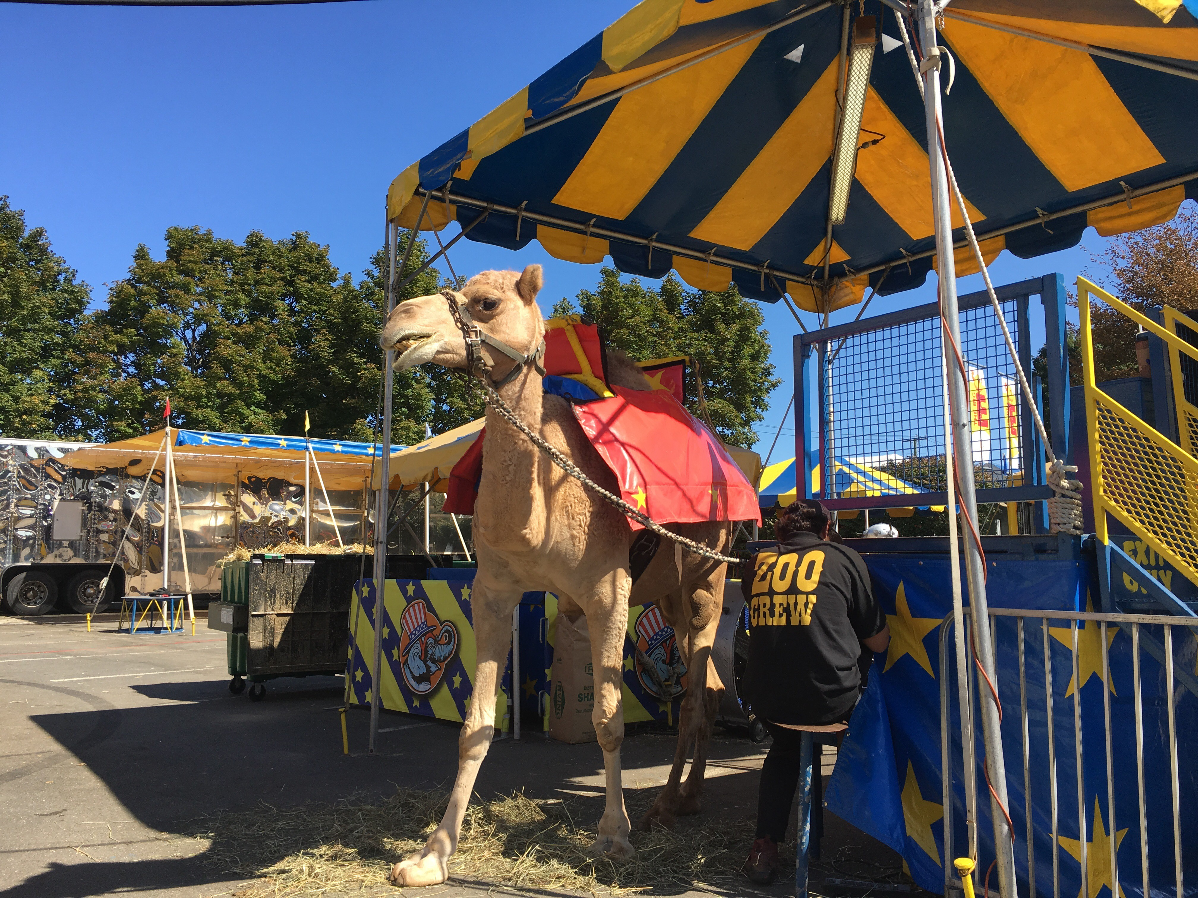 Big E visitors miss Beulah the elephant; camel now featured at petting zoo
