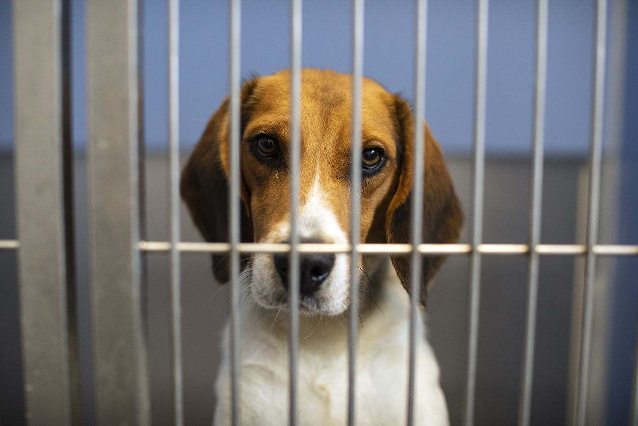 Nearly 80 animals removed from Michigan home with 'mushy' floors due to urine, feces