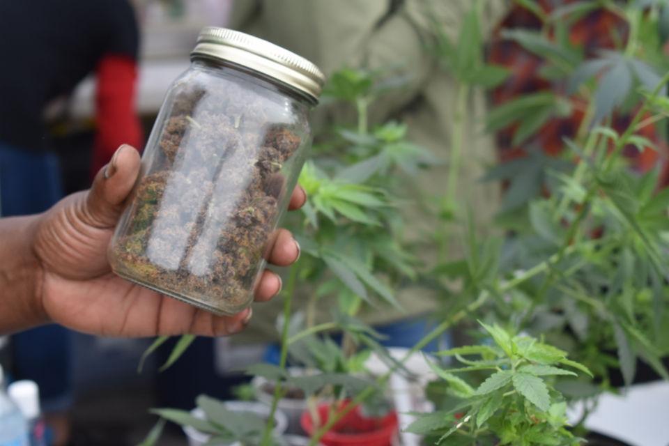 First Native American community in Michigan legalizes marijuana