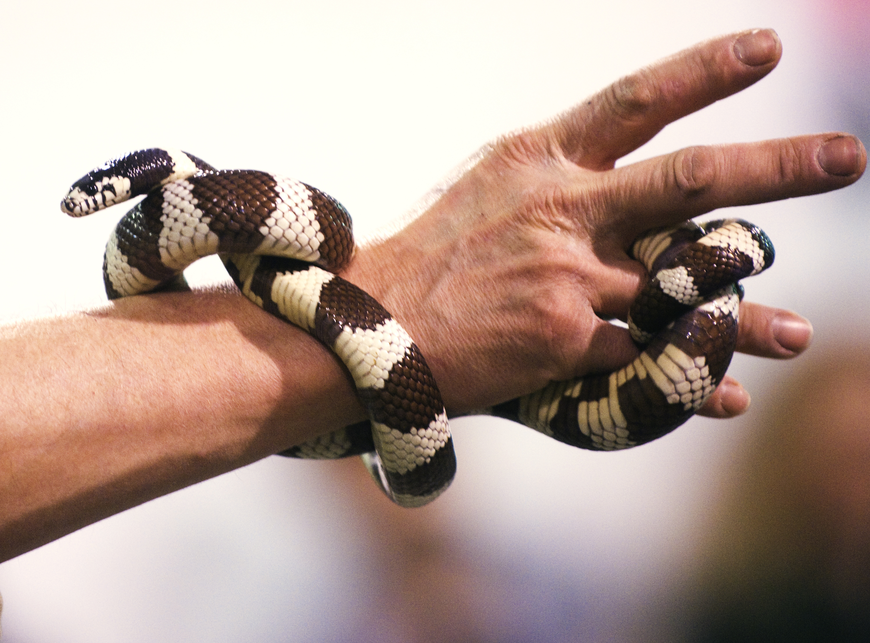 Pa. reptile sanctuary saves snake from eating itself: 'He must have swallowed almost half of his body' - pennlive.com