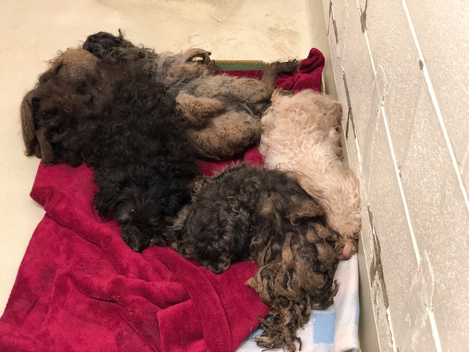 More Than 100 Dogs Rescued From Home In Southwest Ohio