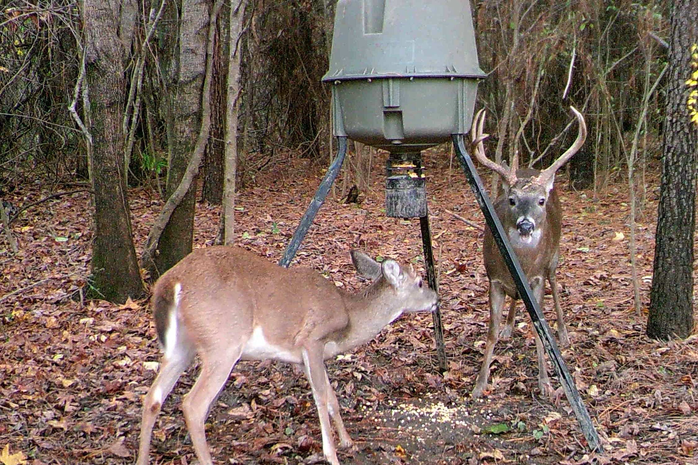 New for Alabama deer season: Baiting on private land