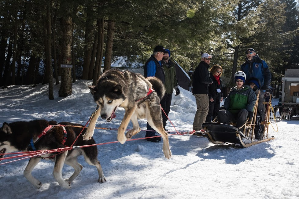Mushing through the snow: Where to go dog sledding in Upstate NY