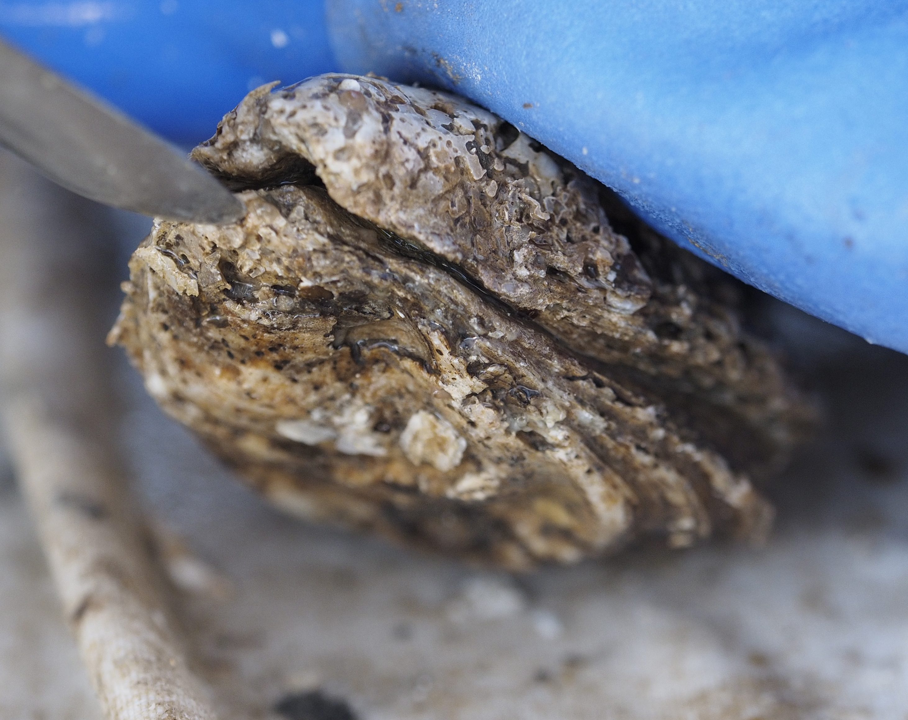 DEP shucks Jersey Shore pick-your-own clam, oyster biz after owner sinks $50K into launch