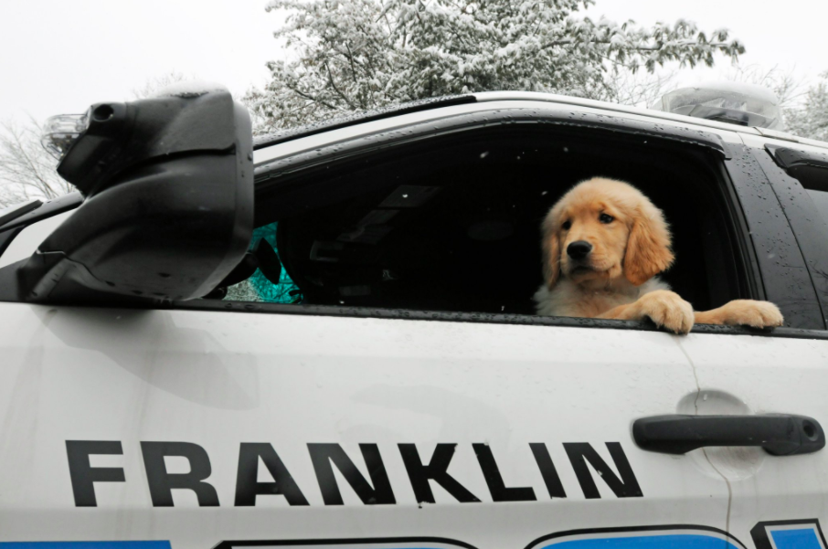 Franklin Police Department adds adorable therapy dog to its ranks