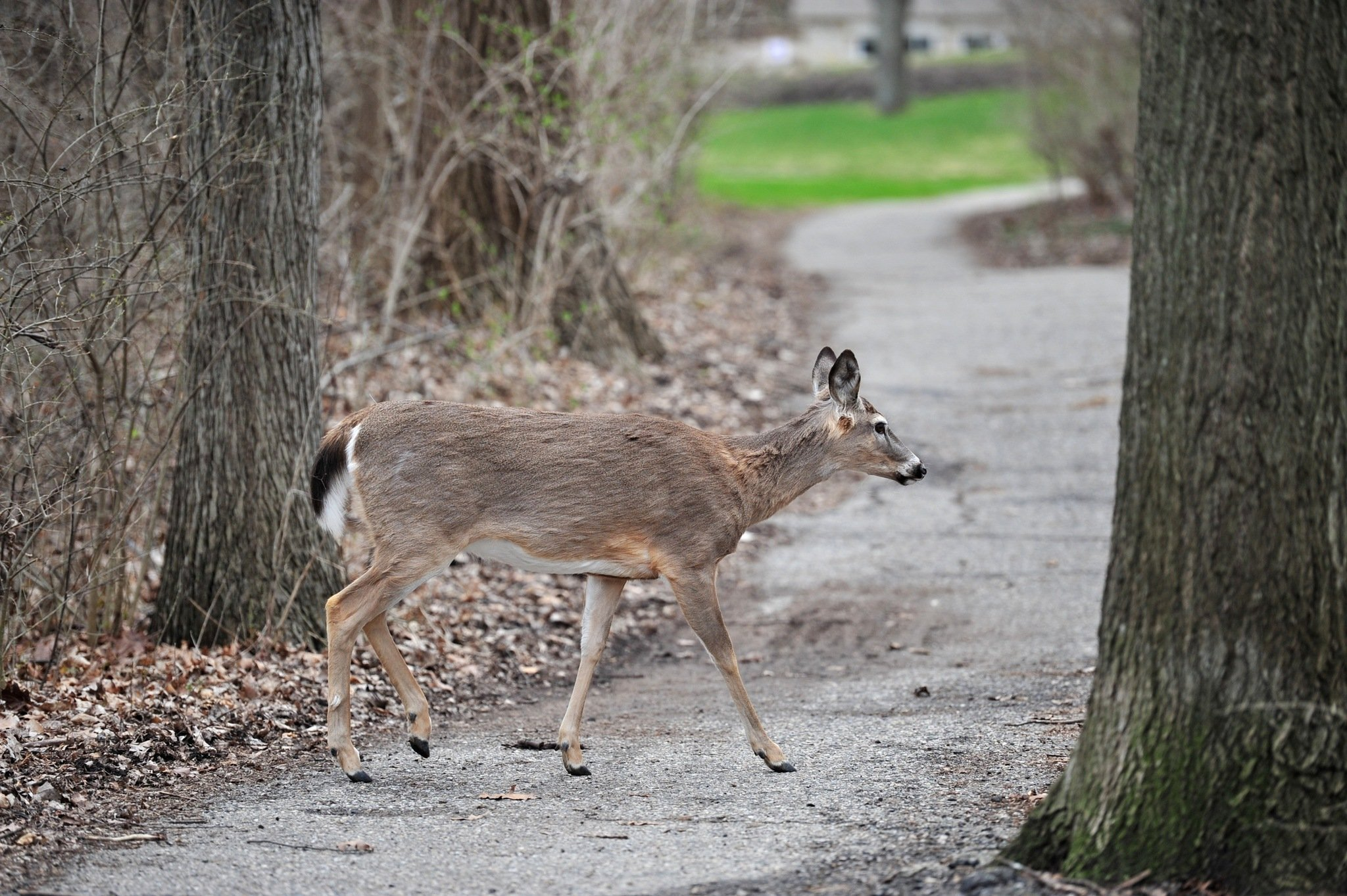 Michigan family uses furniture to fend off frantic deer chased into their living room