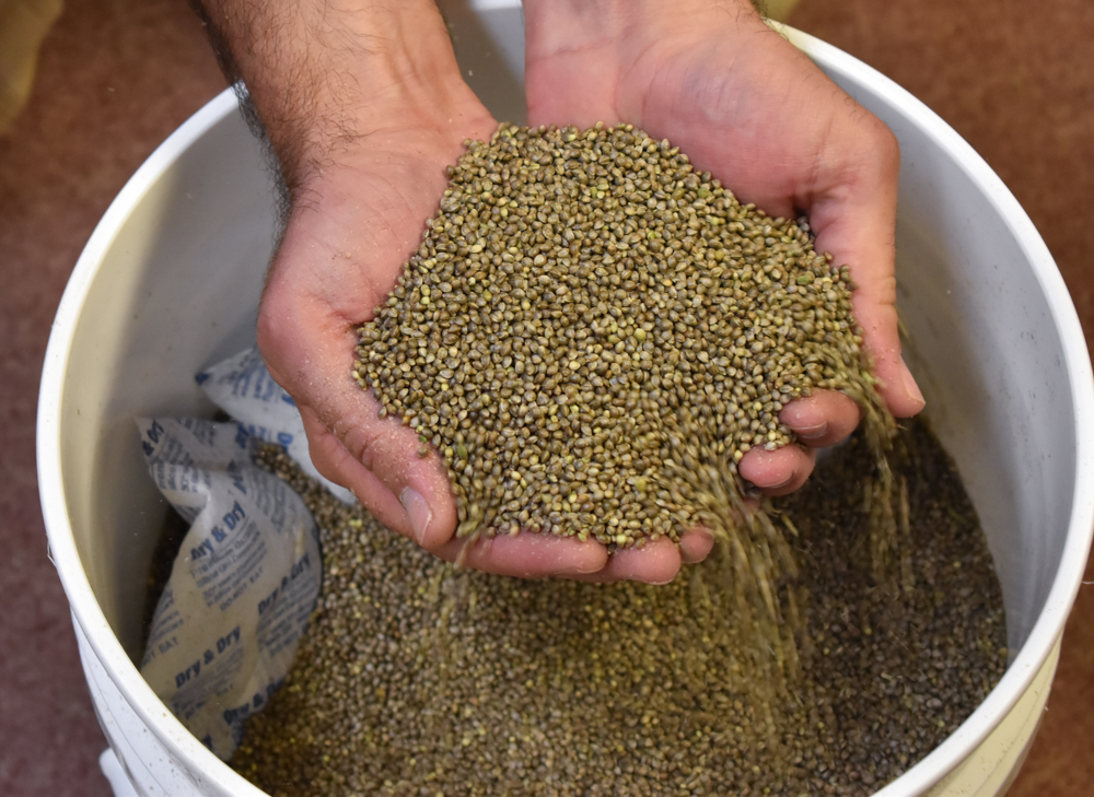 After hemp crop tanks, CBD producer sues Oregon hemp seed seller for $44 million, lawsuit says
