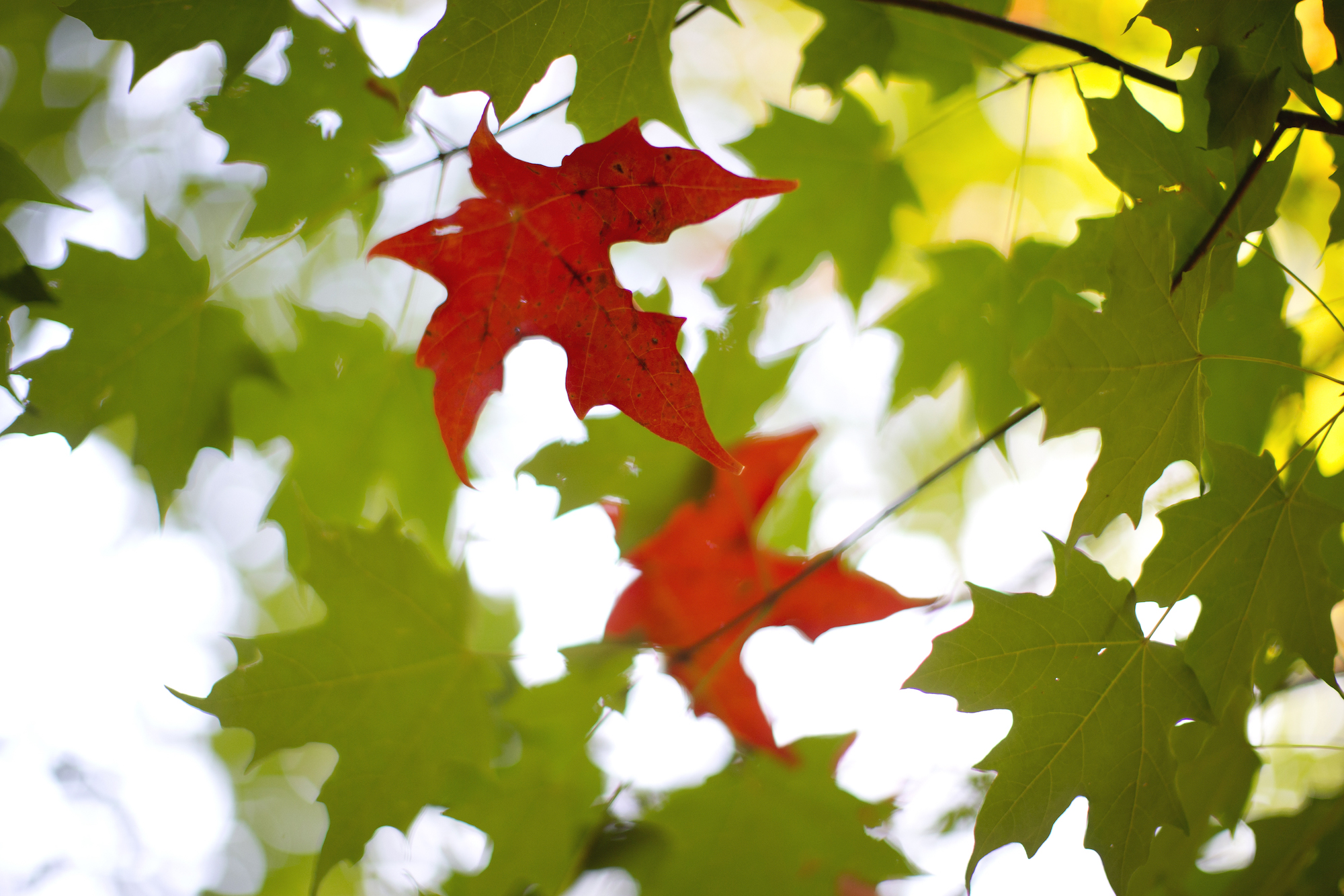 Get ready for short days, long nights: Monday's autumnal equinox marks beginning of fall
