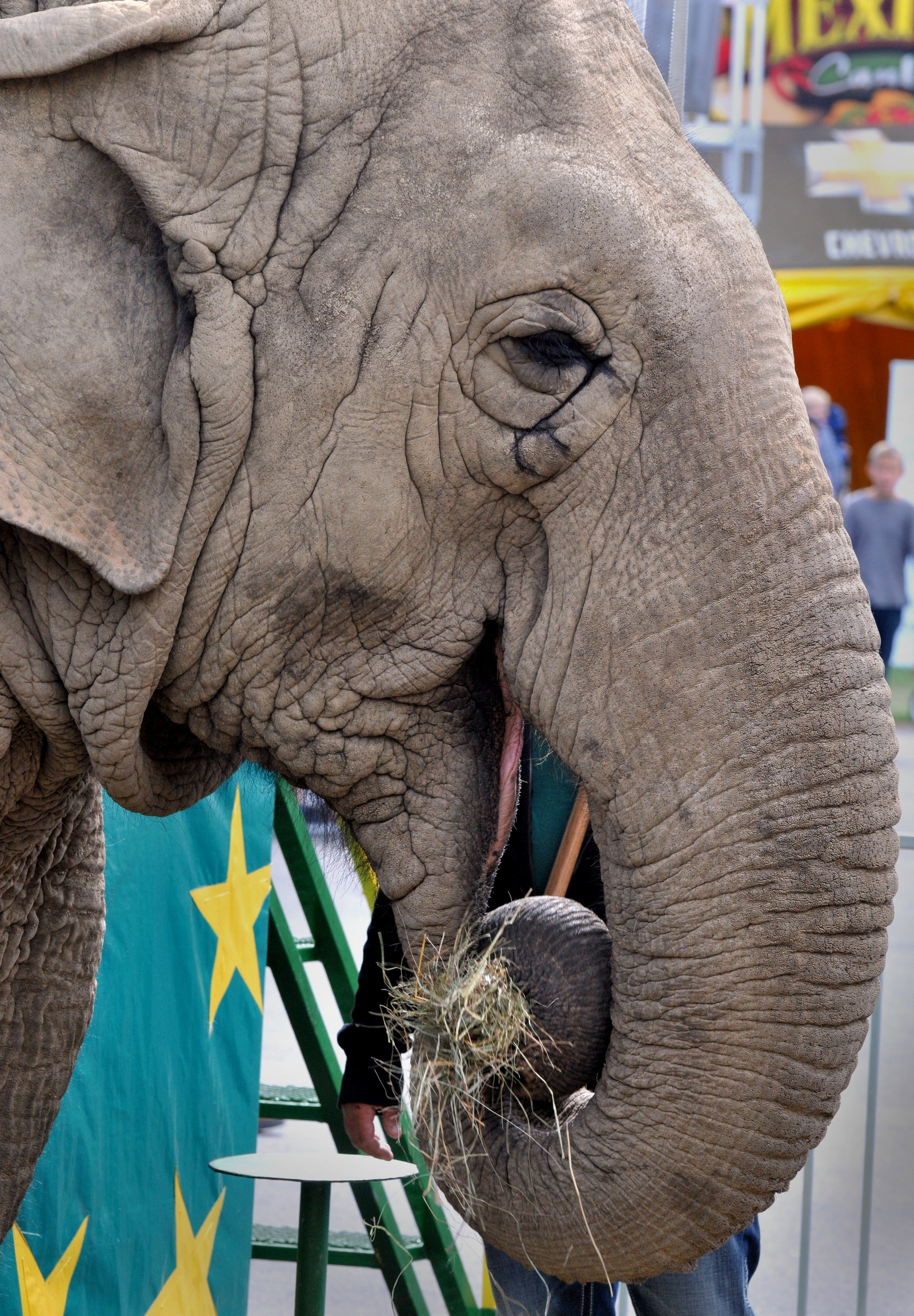 The Big E announces death of Beulah the elephant, 54; Fair officials say she died of natural causes