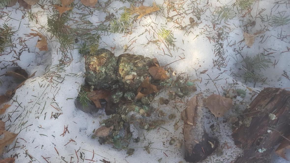 Someone is poisoning dogs, wildlife near U.P. border, authorities warn