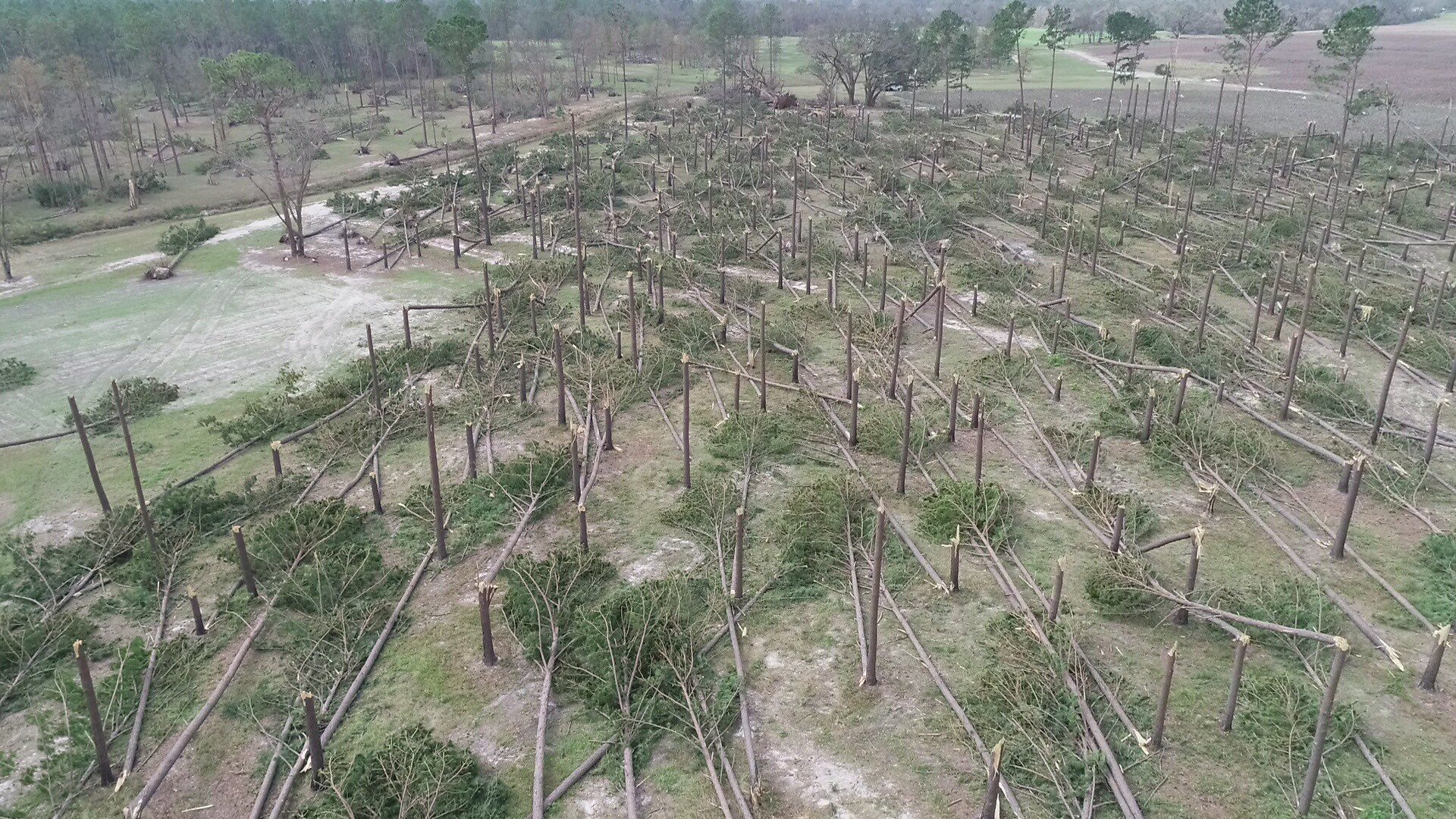 Alabama Forestry Commission officials estimate $20 million in timber in Houston County was lost to Hurricane Michael.